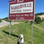 Bearless in Barkerville