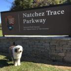 Navigating the Natchez Trace