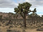 With or without you in Joshua Tree