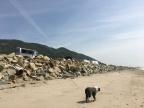 Beach Blanket Bear-o
