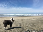 Slogging up the Oregon Coast
